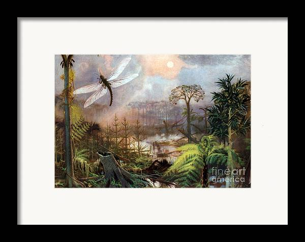 Flora Framed Print featuring the photograph Meganeura In Upper Carboniferous by Science Source