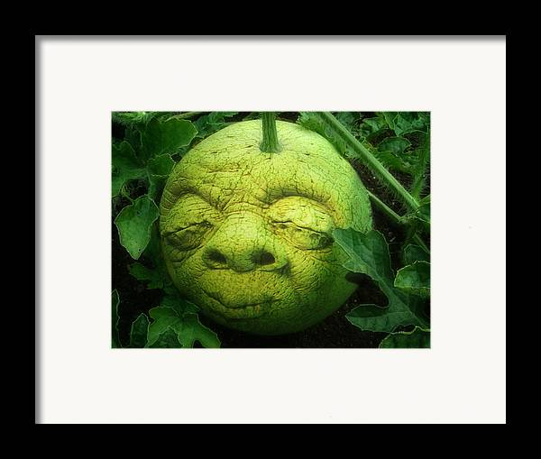 Melon Framed Print featuring the photograph Melon Head by Jack Zulli