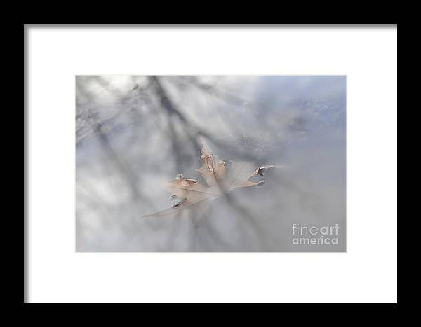 Leaf Framed Print featuring the photograph Memorie Liquide by Yuri San