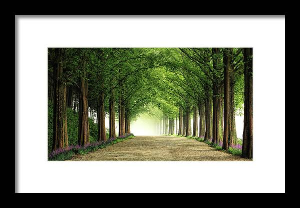 Landscape Framed Print featuring the photograph Metasequoia Road by Tiger Seo