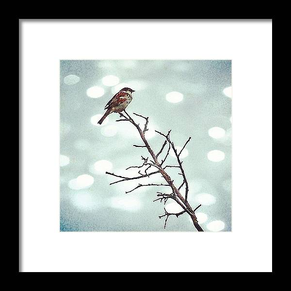 Life Framed Print featuring the photograph #mgmarts #bird #nature #life #bestpic by Marianna Mills