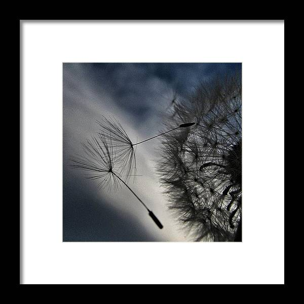 Art Framed Print featuring the photograph #mgmarts #dandelion #makeawish #wish by Marianna Mills