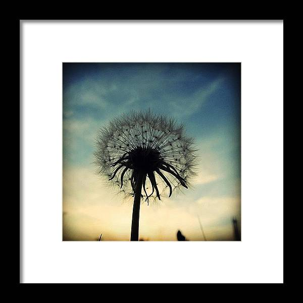 Life Framed Print featuring the photograph #mgmarts #dandelion #weed #sunset #sun by Marianna Mills