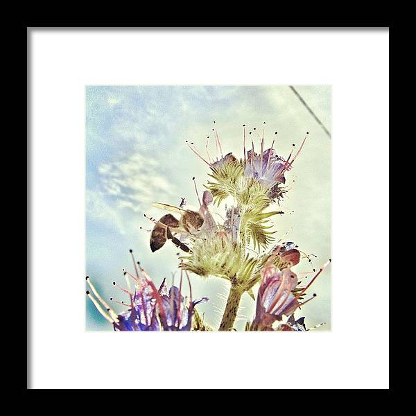 Summer Framed Print featuring the photograph #mgmarts #flower #spring #summer #bee by Marianna Mills