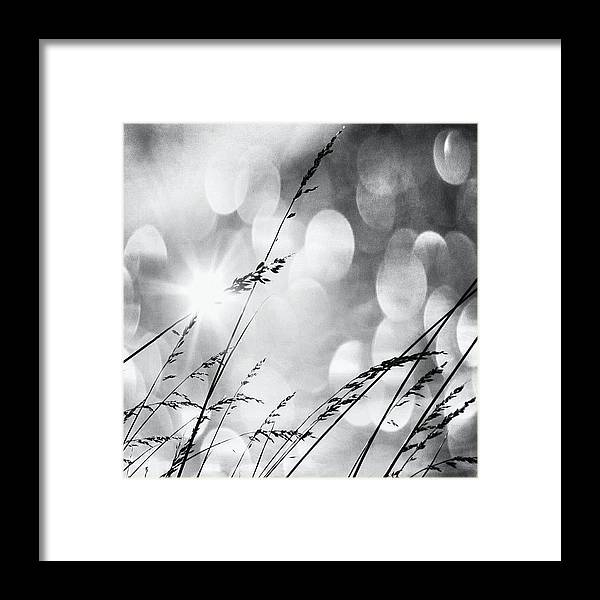 Life Framed Print featuring the photograph #mgmarts #grass #weed #wind #field by Marianna Mills