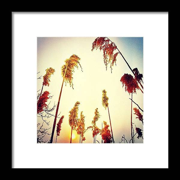 Beautiful Framed Print featuring the photograph #mgmarts #sunset #bright #beautiful by Marianna Mills
