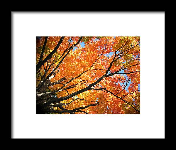 Fall Framed Print featuring the photograph Michigan Sugan Maple by Dean Ginther