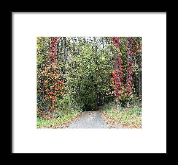 Michigan Framed Print featuring the photograph Michigan's Gateway to Fall by Ann Marie Chaffin