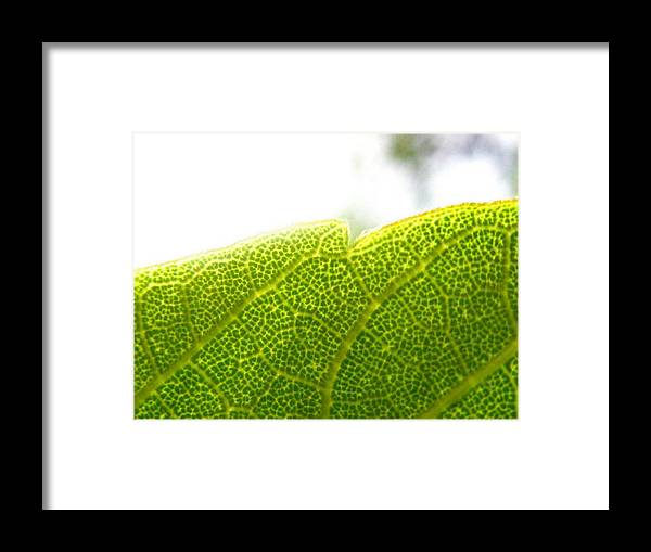 Leaf Framed Print featuring the photograph Micro Leaf by Rhonda Barrett