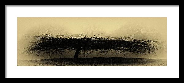 Antique Yellow Framed Print featuring the photograph Middlethorpe Tree In Fog Antique Yellow Panorama by Tony Grider