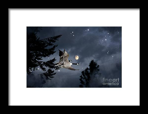 Canada Geese Framed Print featuring the photograph Midnight Flight by Beve Brown-Clark Photography