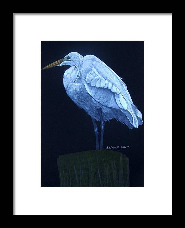 Egret Framed Print featuring the drawing Midnight Watch by Anita Putman