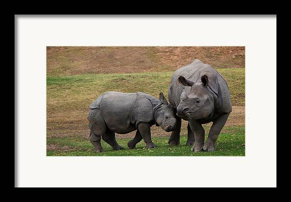 San Diego Safari Park Framed Print featuring the photograph Mili And Sundari by Steve LLamb