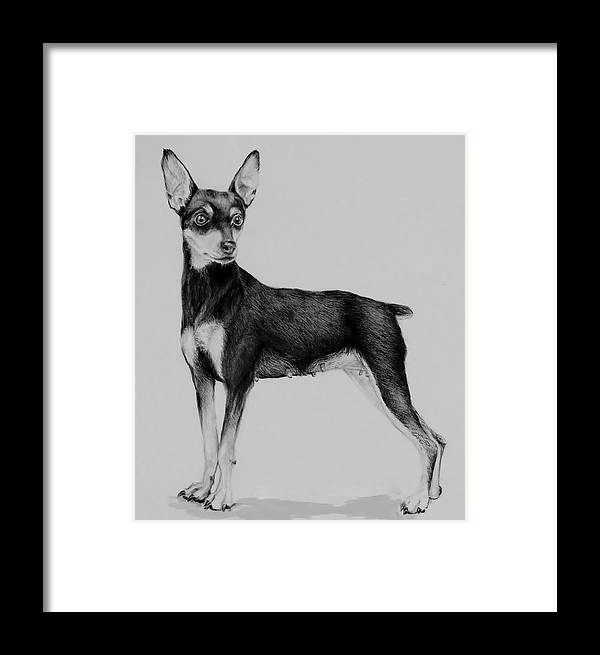Mini Pin Framed Print featuring the drawing Min Pin by Jean Cormier