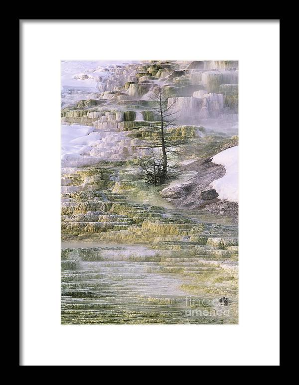 North America Framed Print featuring the photograph Minerva Springs Terraces Yellowstone National Park by Dave Welling