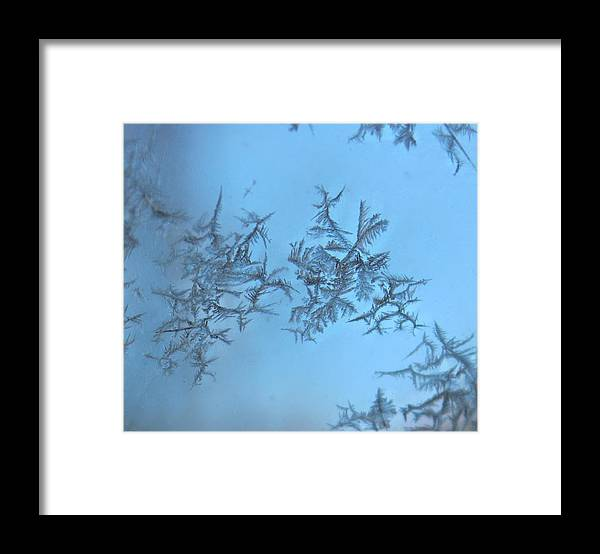 Frost Framed Print featuring the photograph Miniature Beauty by Candice Trimble