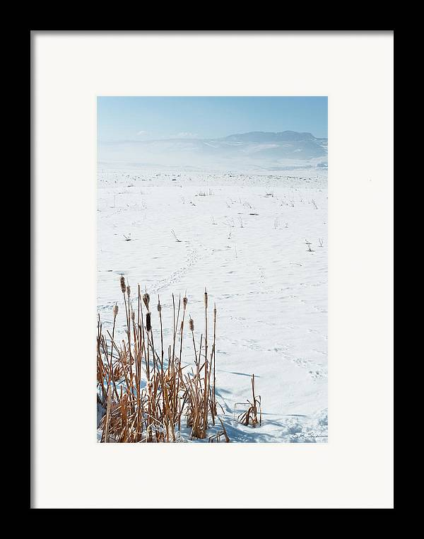 Cattail Framed Print featuring the photograph Minimalist Cattail Prairie In Colorado by Julie Magers Soulen