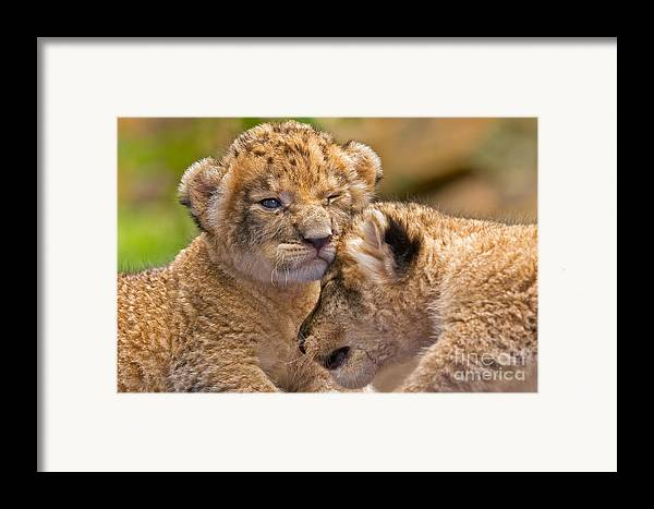 Khao Kheow Open Zoo Framed Print featuring the photograph Minor Collision by Ashley Vincent