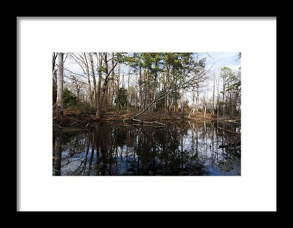 Forest Framed Print featuring the photograph Mirror Mirror by Christopher McPhail