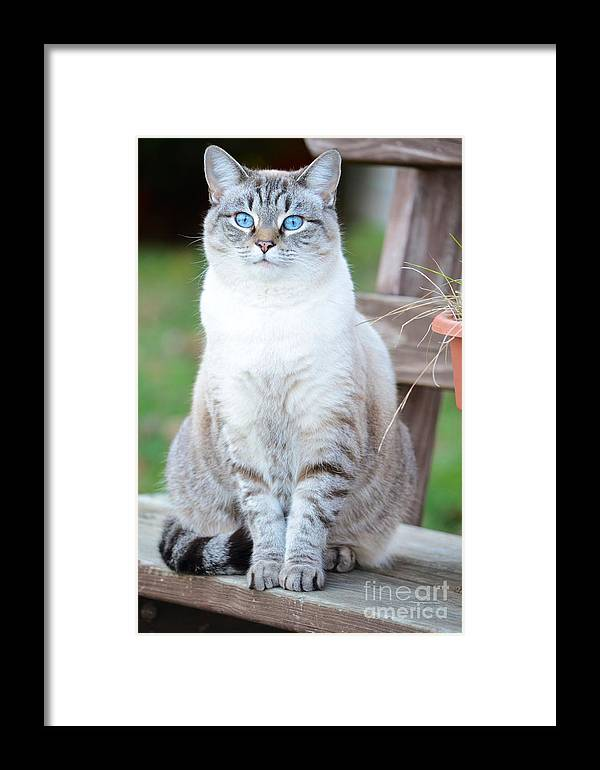 Fine Art Framed Print featuring the photograph Miss Dutchess by Kerri Lane