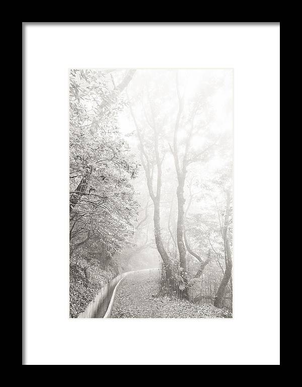 Mist Framed Print featuring the photograph Mist In Madeira by Roger Fonts
