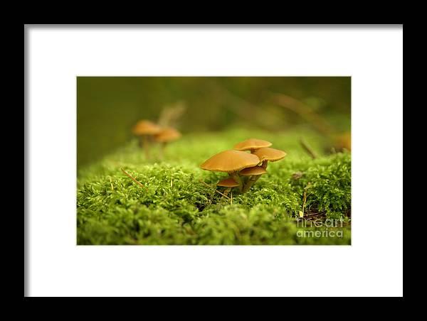 Mistery Mushrooms Framed Print featuring the photograph Mistery Mushrooms by Jolanta Meskauskiene