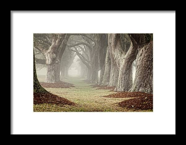 Trees Framed Print featuring the photograph Misty Morning Avenue Of Oaks by Barbara Northrup