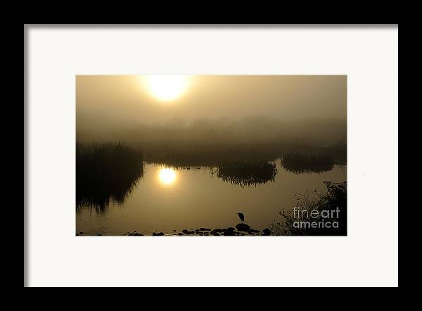 Marsh Framed Print featuring the photograph Misty Morning In The Marsh by Nancy Greenland