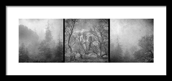 Landscapes Framed Print featuring the photograph Misty Trees Tryptic by Guido Montanes Castillo