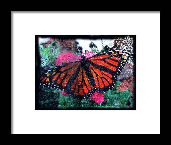 Monarch Framed Print featuring the mixed media Mnarch Butterfly by Monte Landis