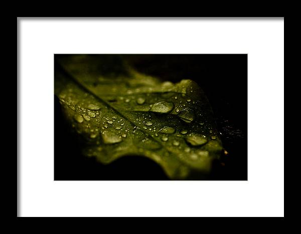 Leaf Framed Print featuring the photograph Moist Leaf by Shane Holsclaw