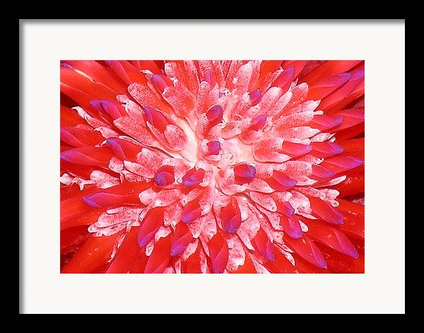 Hawaii Iphone Cases Framed Print featuring the photograph Molokai Bromeliad by James Temple