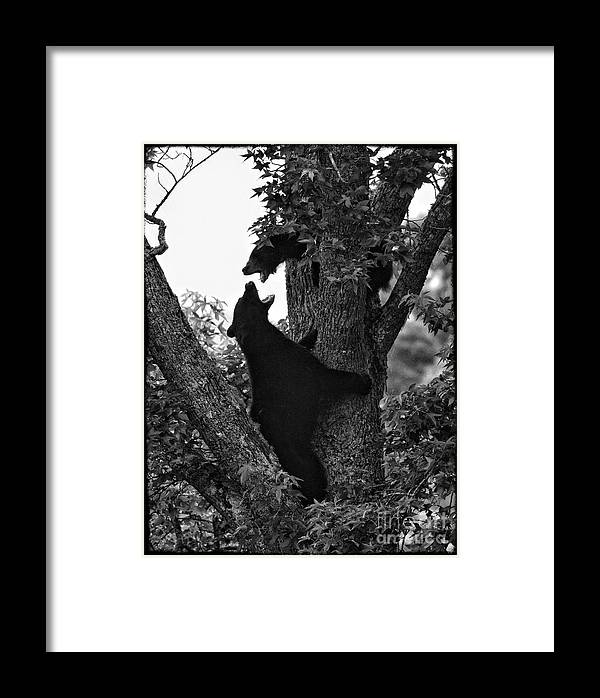 Framed Print featuring the photograph Momma Knows Best by James Neiss
