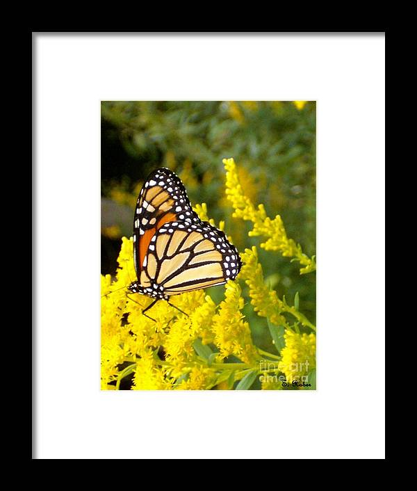Monarch Framed Print featuring the photograph Monarch by Sara Raber