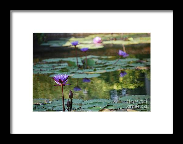 Nymphaea Framed Print featuring the photograph Monet's Waterlily Pond Number Two by Heather Kirk