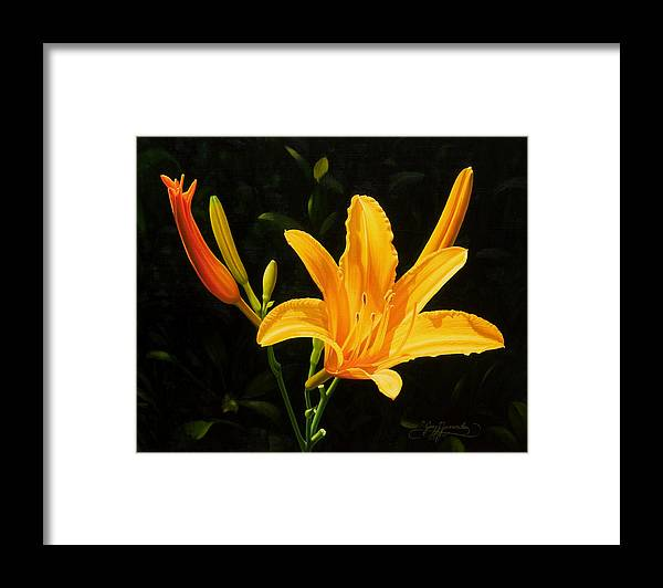 Floral Framed Print featuring the painting Monikas Lily by Gary Hernandez