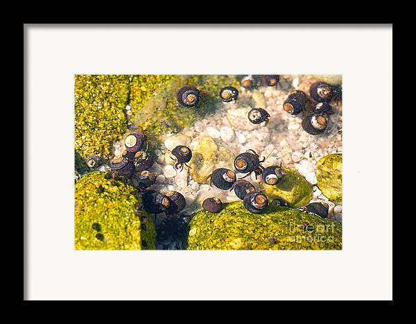 Monetery Bay Framed Print featuring the photograph Monterey Bay Tide Pools by Artist and Photographer Laura Wrede