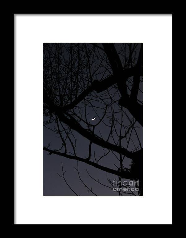 Moon Framed Print featuring the photograph Moon Beyond Tree IIi by Robert Yaeger