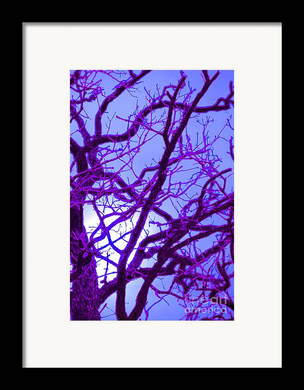First Star Art Framed Print featuring the photograph Moon Tree Purple by First Star Art