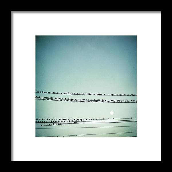 Bird Framed Print featuring the photograph Moonrise by Carolyn Cochrane