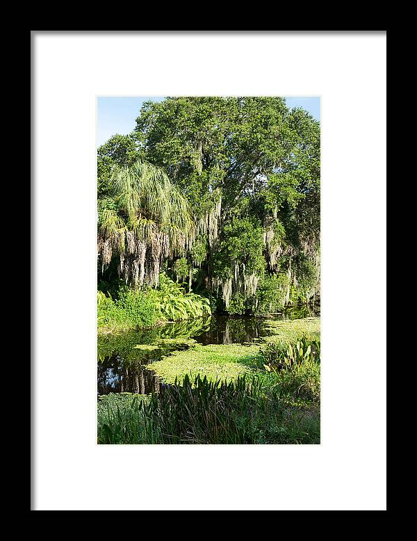 Flora And Fauna Framed Print featuring the photograph More Water And Green by Robert VanDerWal