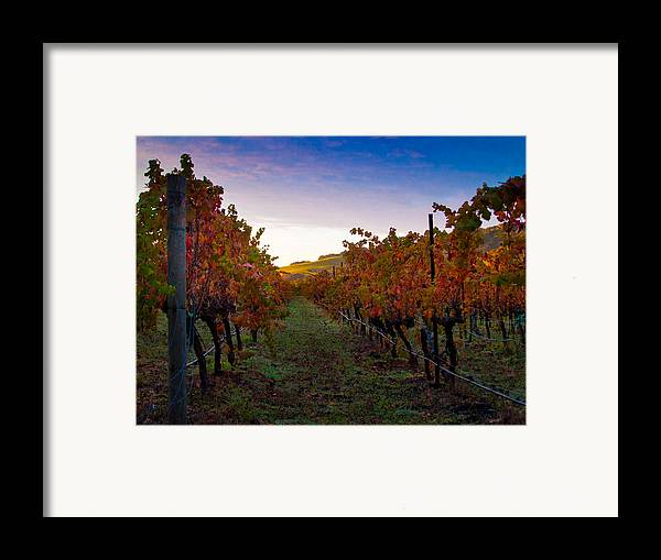 Nature Framed Print featuring the photograph Morning At The Vineyard by Bill Gallagher