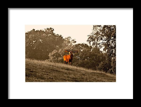 Red Deer Framed Print featuring the photograph Morning Call by Scott Carruthers