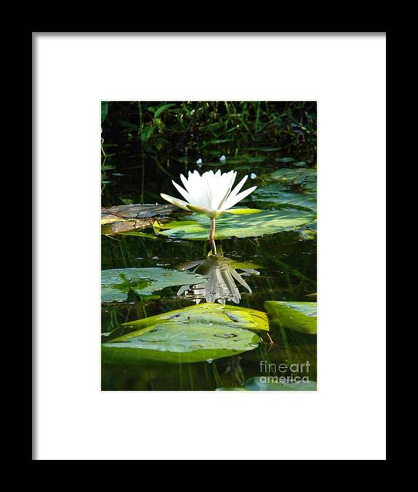 Pond Framed Print featuring the photograph Morning Calm by Matthew Seufer