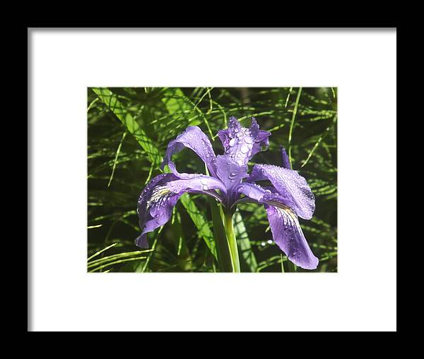Framed Print featuring the photograph Morning Dew by Randy Esson