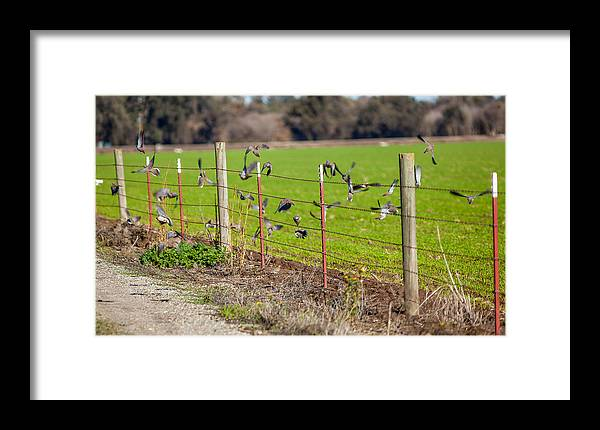 Doves Framed Print featuring the photograph Morning Doves In December by Brian Williamson