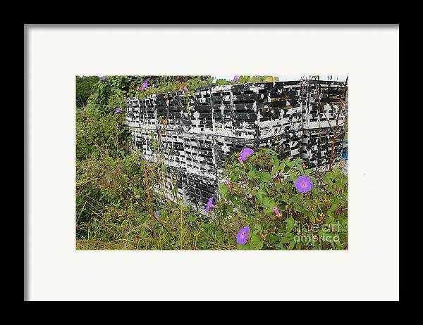 Morning Glories Framed Print featuring the photograph Morning Glories And Crab Traps by Theresa Willingham