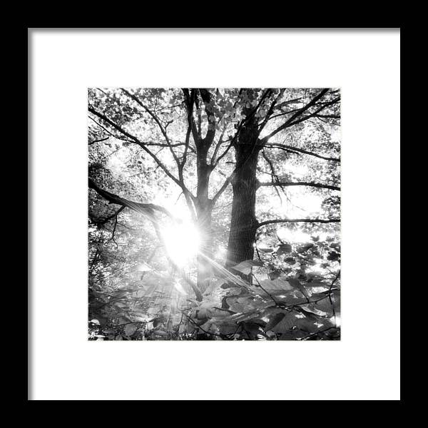 Tree Art Framed Print featuring the photograph Morning In The Forest by Angie Rea