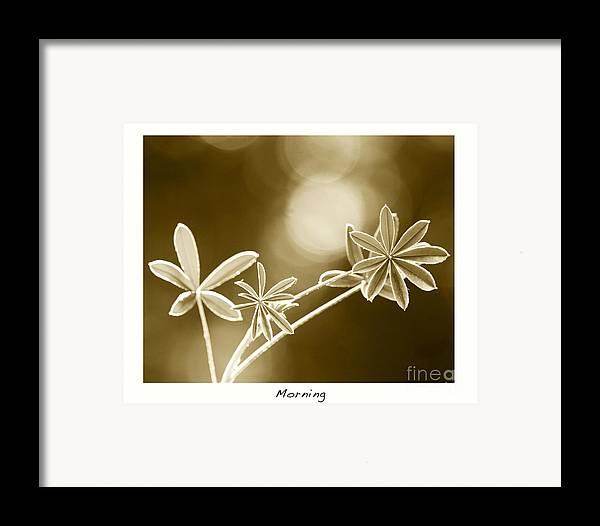 Vintage Art Framed Print featuring the photograph Morning by Artist and Photographer Laura Wrede