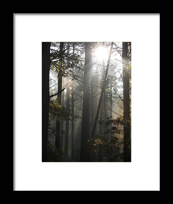 Pines Framed Print featuring the photograph Morning Pines by Karen Kluglein